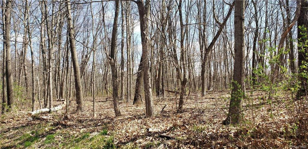 Land for Sale at Indian Road, Milan, NY 12571 Milan, New York 12571 United States